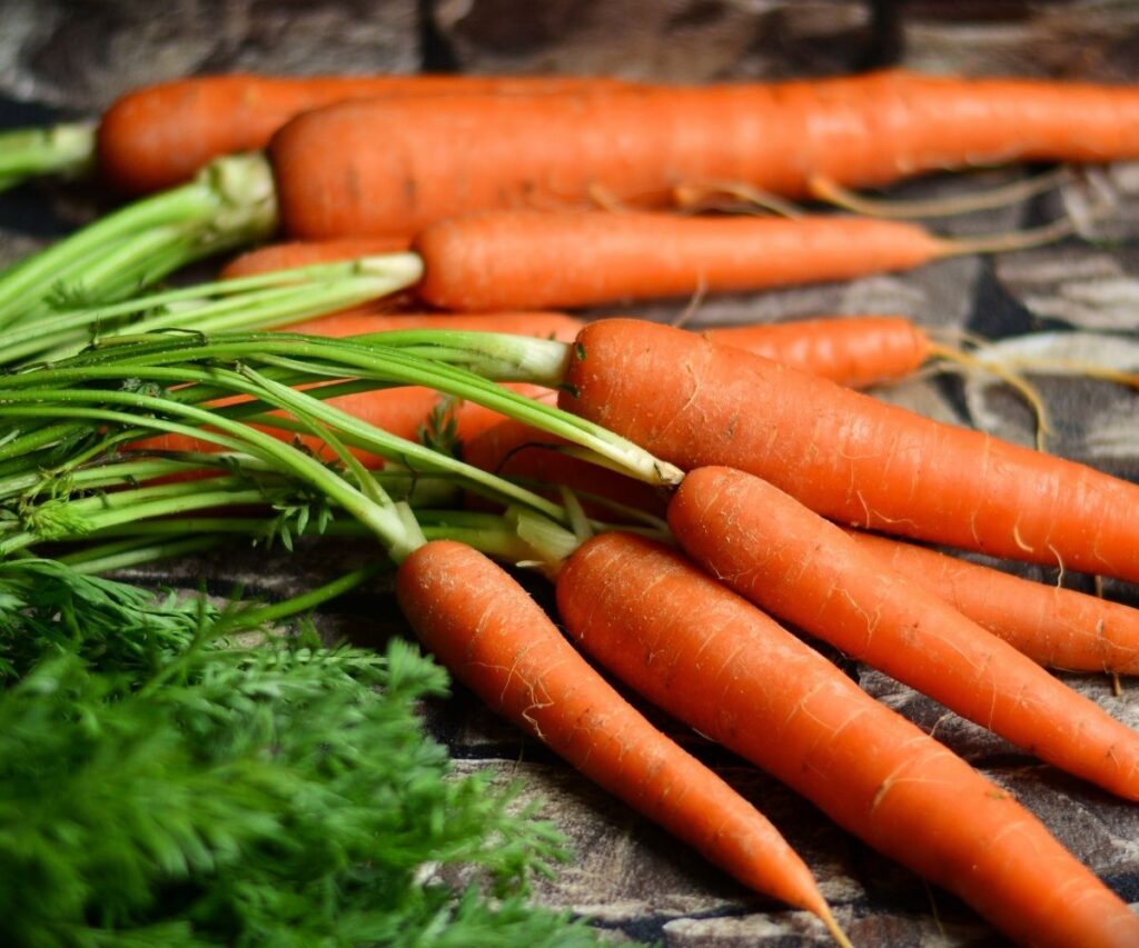 Fresh carrots with the tops on a counter.