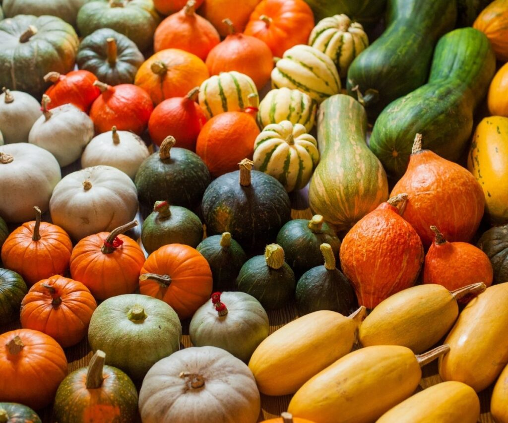 Various types of squash in different colors.
